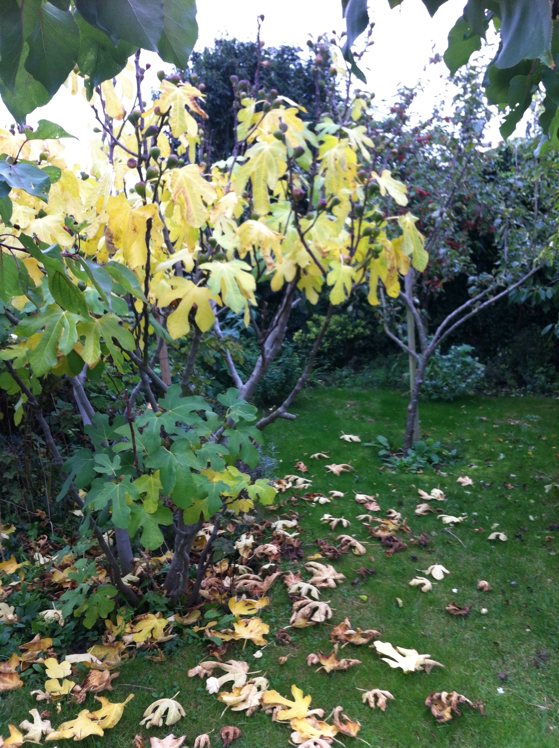 Poem in Autumn: NeverLand of Now